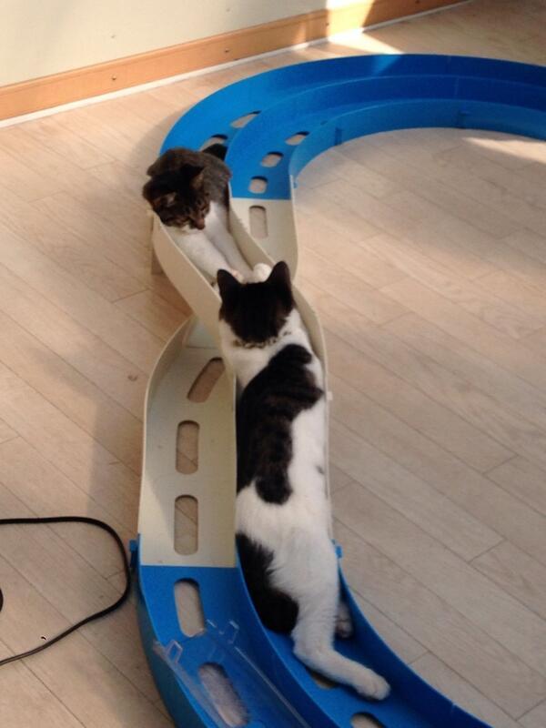 ピッタリ! ミニ四駆コースで眠るネコたち(笑)cat_0124