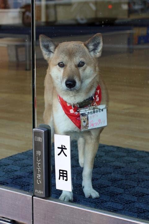 犬用! 鍵の救急サービス「熊本合カギセンター」に設置されている犬用自動ドア(笑)dog_0027