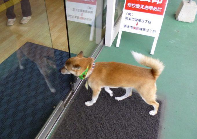 犬用! 鍵の救急サービス「熊本合カギセンター」に設置されている犬用自動ドア(笑)dog_0027_02