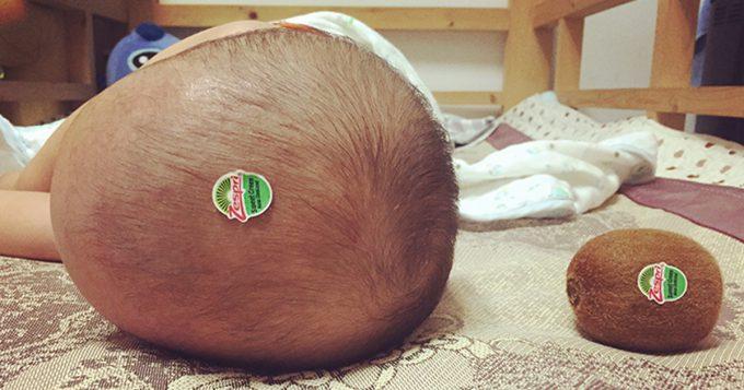 【赤ちゃんと食べ物おもしろ画像】食べごたえあり! 赤ちゃんの頭とキウイが完全に一致(笑)kids_0175