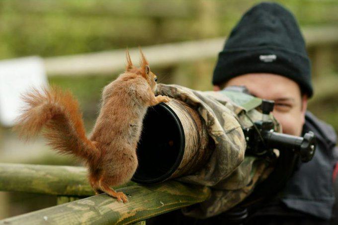 近すぎ! 野生のリスを撮影しようと思ったらむっちゃ近寄ってきた(笑)animal_0104