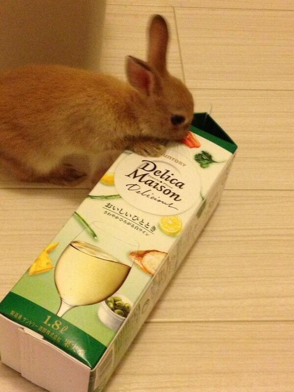 食べれない! 白ワイン「デリカメゾン」パッケージに描いてあるニンジンを食べようとするウサギ(笑)animal_0118