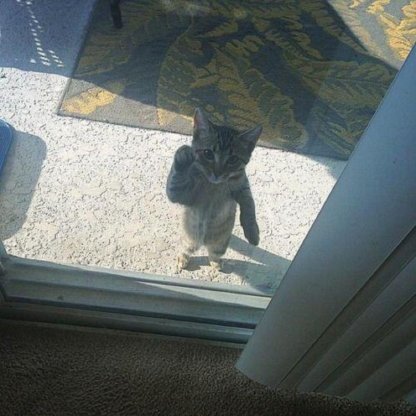 開けてー! 窓の外でドアを開けてほしいしぐさを見せるネコがかわいい(笑)cat_0116