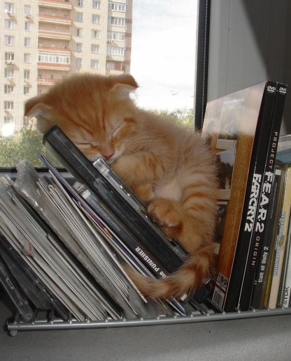 すやすや! ゴチャゴチャしたCDラックの上でも気持ちよさそうに眠る子ネコ(笑)cat_0118
