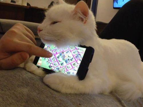 スマホスタンド! お腹の上に猫が乗ってきた時の活用方法(笑)cat_0123