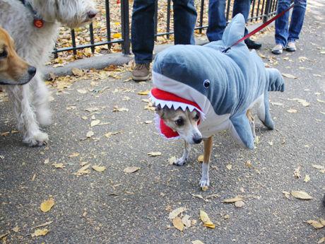 【海外ハロウィンの犬おもしろ仮装画像】ガブ! NYで行われた『ハロウィーン・ドッグ・パレード』に参加した仮装犬がかわいい(笑)halloween_0107