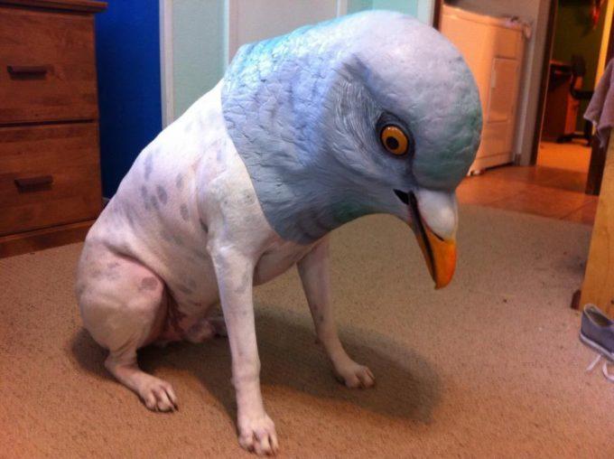 【ハロウィンの犬おもしろ仮装画像】ポッポ! ハロウィンなのでフレンチブルドッグも仮装(笑)halloween_0132