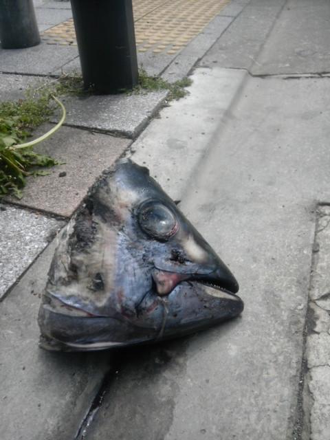 二度見必死! 常識では考えられない物が路上に落ちていた(笑)photo_0037