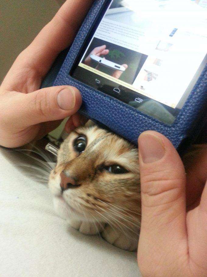 ニャニしてるの? スマホ見ているとかまって攻撃してくる猫が可愛すぎます(笑)cat_0142