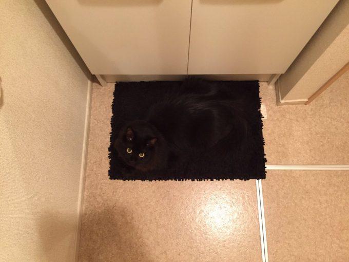 同化! 洗面所マットに同化した黒猫がんちゃんのステルススキルが高すぎる(笑)cat_0149