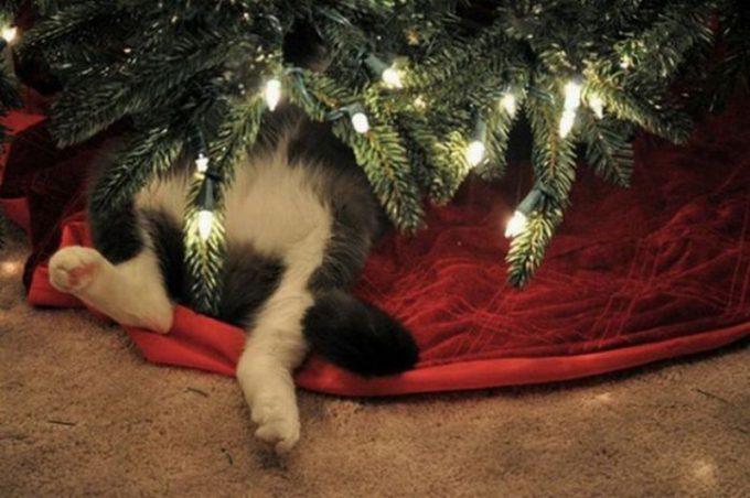 猫がクリスマスツリーに夢中になると無防備になることが判明(笑)christmas_0071