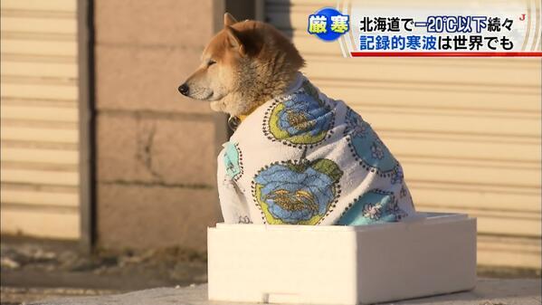 【犬おもしろ画像】寒そう! 北海道のマイナス20度以下の中、毛布一枚で耐える柴犬が可哀想だけどかわいい(笑)dog_0024