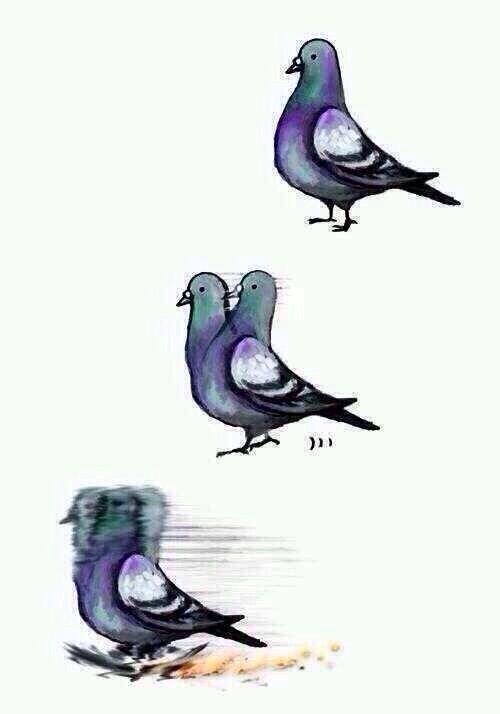 ポッポー! 鳩が走る時の動きをイラストで再現笑animal_0125