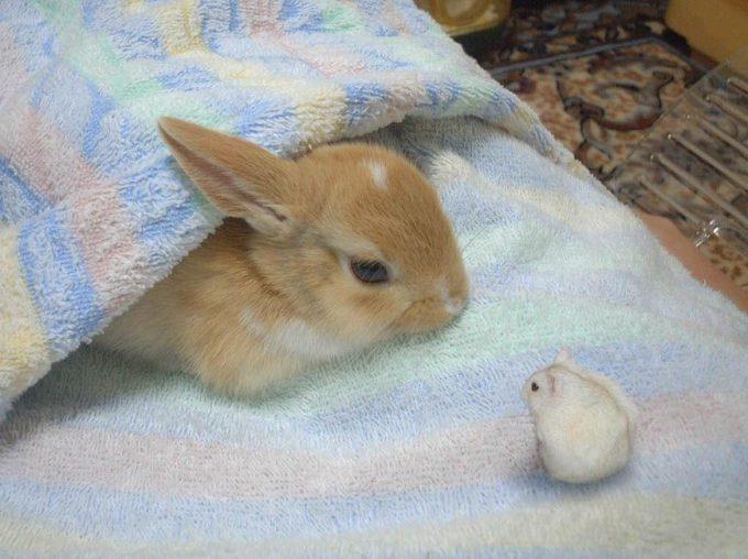 どうしたの? 横になるウサギとそれを見つめるハムスターの光景に癒されます(笑)animal_0126