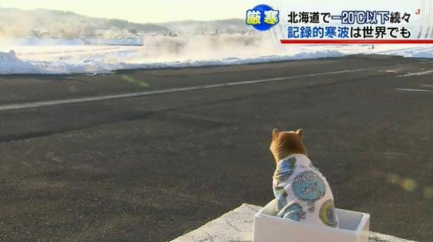 寒そう! 北海道のマイナス20度以下の中、毛布一枚で耐える柴犬が可哀想だけどかわいい(笑)dog_0024_01
