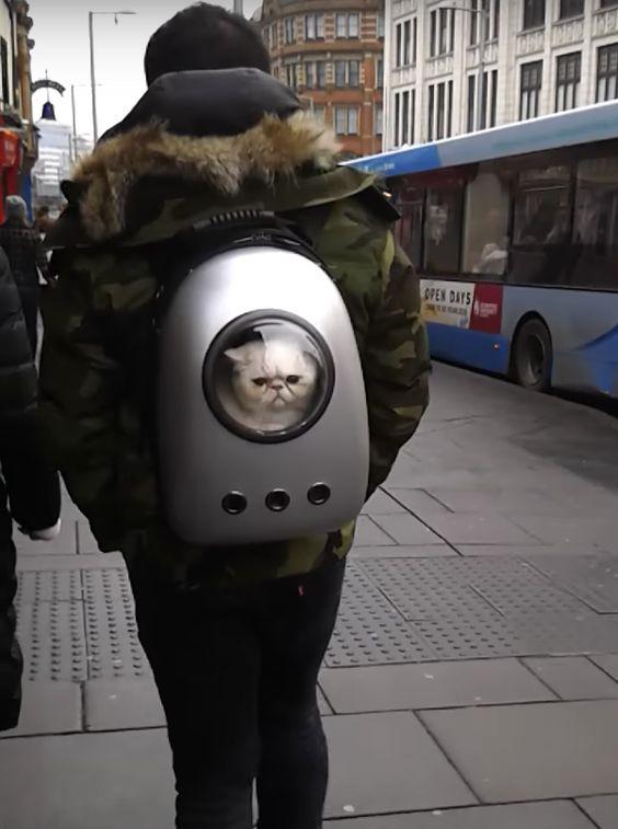 不満? イギリスの街中で見かけた猫用キャリーバッグで運ばれる猫の表情(笑)cat_0114