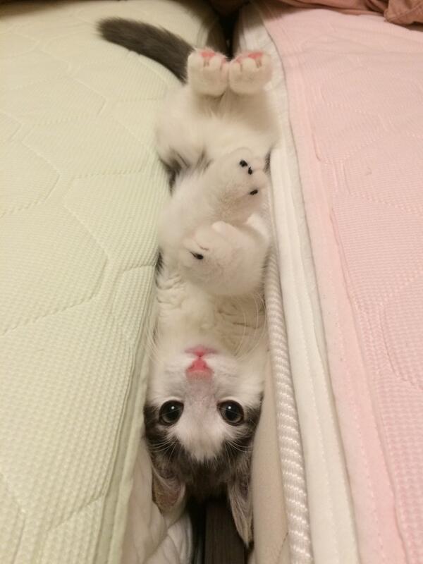 何やってるの? ベッドの間に挟まってこっちを見る猫が面白かわいい(笑)cat_0125