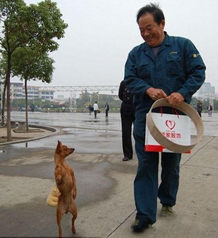 二足歩行! 中国で話題になった人間と同じように歩く犬(笑)animal_0105_01