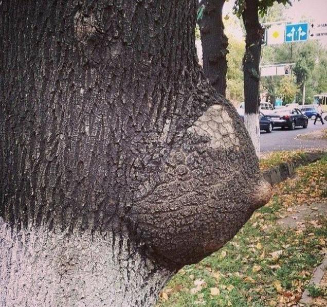 羨ましい! 街で見かけたFカップはある木(笑)hhh_0107