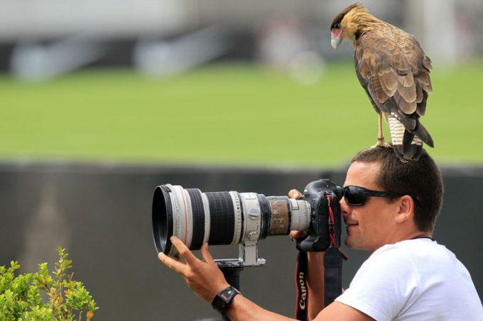 そこ木じゃない! 動物写真家がワシを撮ろうとしていたら(笑)animal_0109