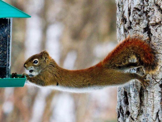 落ちるー! 木と家の間で必死に落ちまいとするリスがかわいい(笑)animal_0110