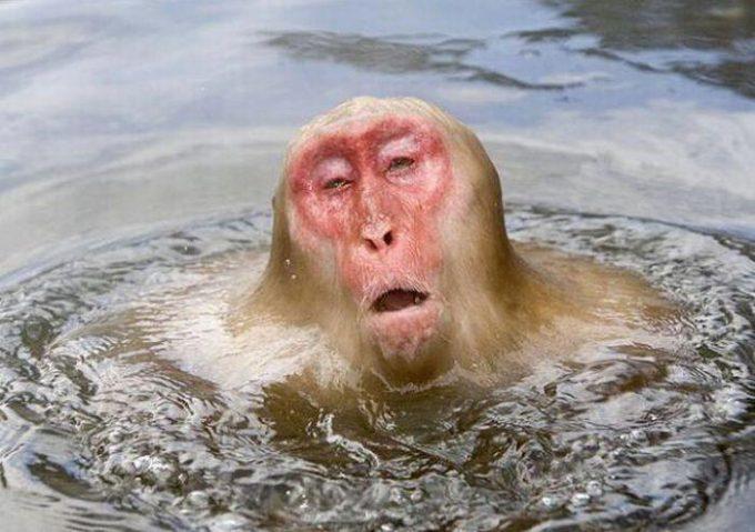 気持ちいい! 温泉があまりに温かくて溶けちゃいそうなニホンザル笑animal_0132