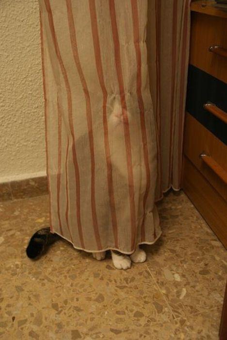 分からないとでも? カーテンで隠れてるつもりでバレバレな猫がかわいい(笑)cat_0143