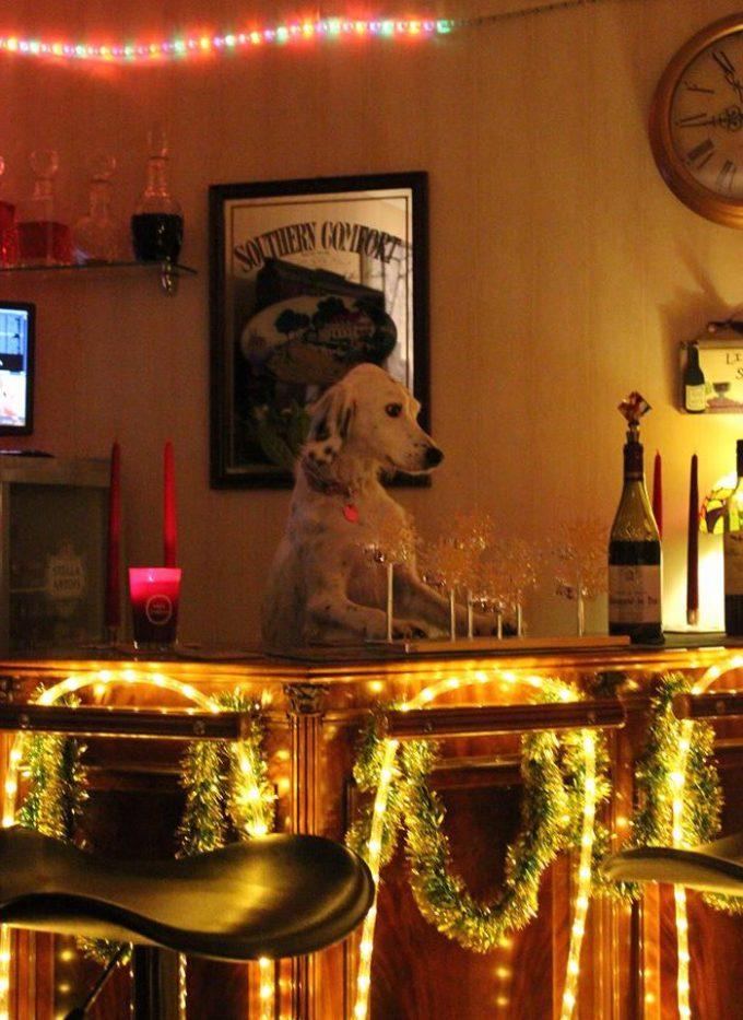 マスター? クリスマスにバーテンダーとして働く犬がシュール(笑)dog_0059