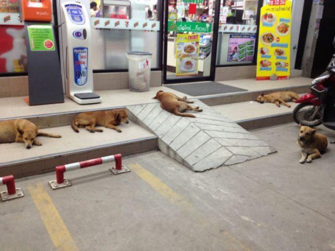 ちょっと怖い! タイのコンビニ前にたむろする野良犬たち(笑)dog_0060