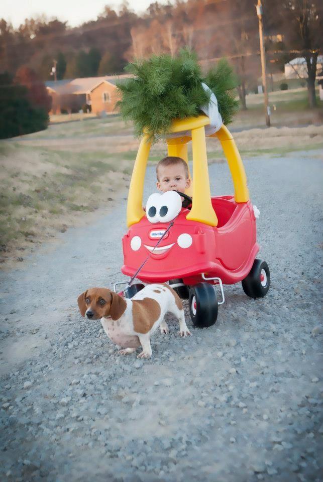 【犬と赤ちゃんおもしろ画像】頑張れ! 手押し車に乗った赤ちゃんを一生懸命引っ張る犬がかわいい(笑)foreign_0145