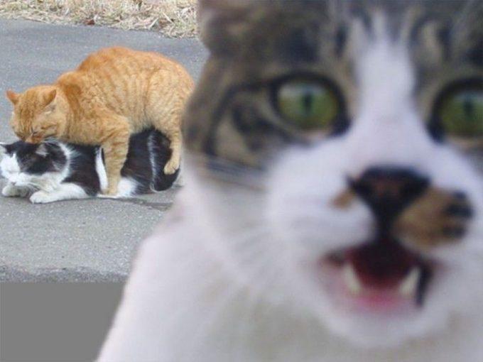 ちょっと! 公衆の面前でアレする猫たちに猫もびっくり(笑)