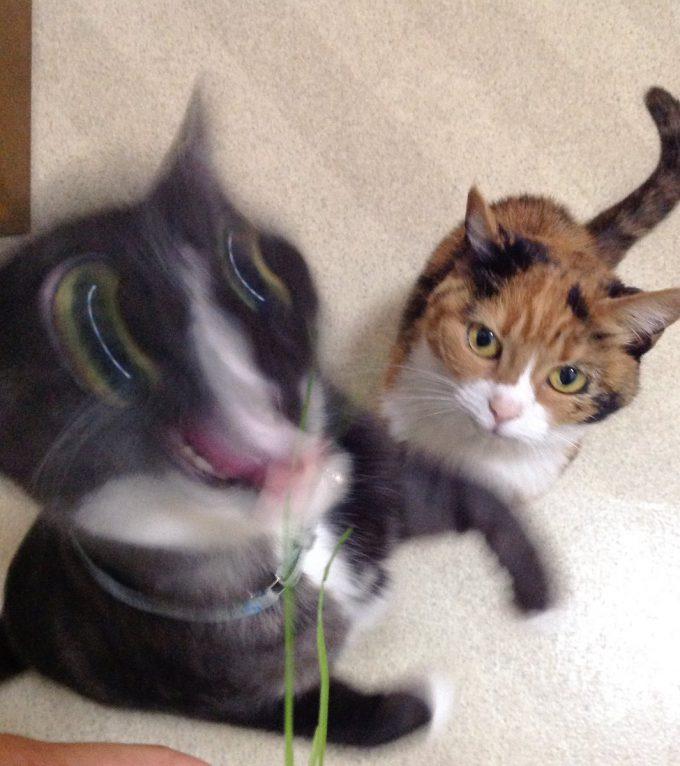 うひぃ! ツイッターで話題となった『ねこの写真ヘタクソ選手権』優勝候補と名高い作品(笑)cat_0134