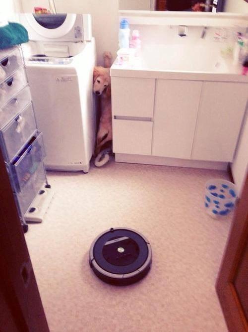 【犬おもしろ画像】怖い! 犬を飼っている家にルンバがやってきたら(笑)dog_0048