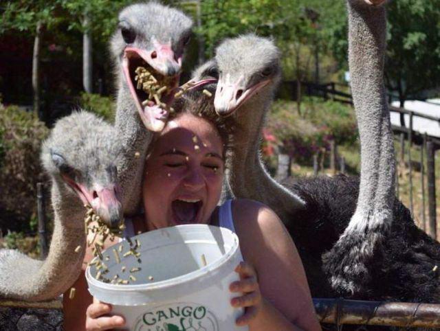 いやー! 餌を持っていたら集団のダチョウに襲われた(笑)foreign_0120