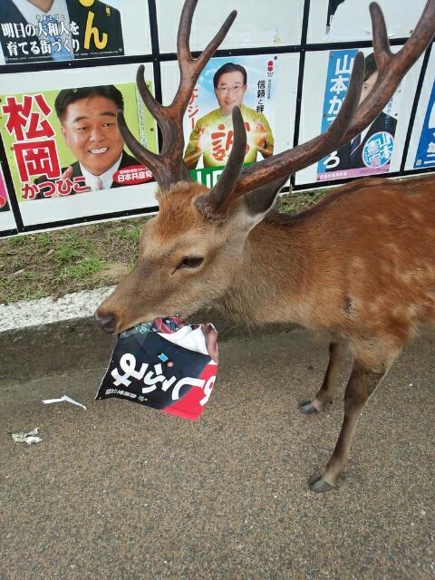 【選挙ポスターを破る珍事件おもしろ画像】違反! 奈良県で選挙ポスターを掲示したら大変なことに(笑)animal_0134