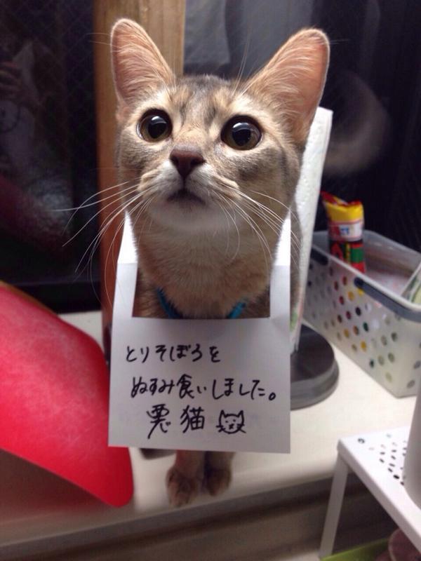 悪猫! とりそぼろをぬすみ食いした猫に反省文(笑)cat_0128