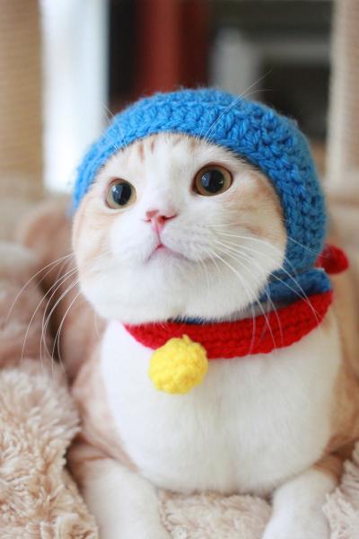 ぼくドラえもん! 『ドラえもん』の被り物をした猫がかわいすぎます(笑)cat_0129