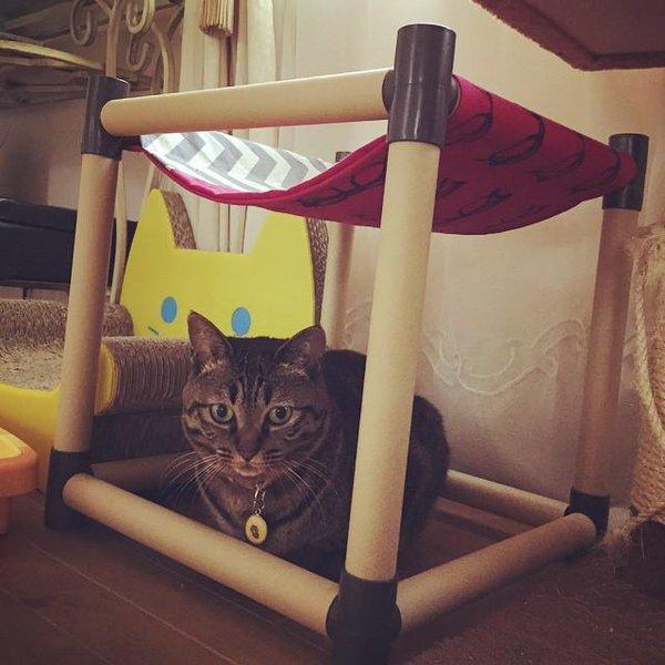 そこじゃない! 猫用ハンモックの使い方を間違える猫(笑)cat_0130