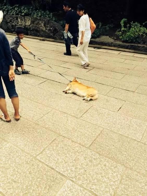 イヤだ! 散歩終わるのがイヤで必死に抵抗する犬と引っ張る子どもがほのぼの(笑)dog_0011
