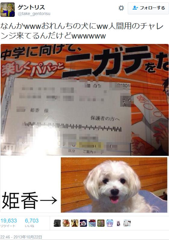 ミス! ペットの犬に進研ゼミの勧誘を送りつけたベネッセ(笑)