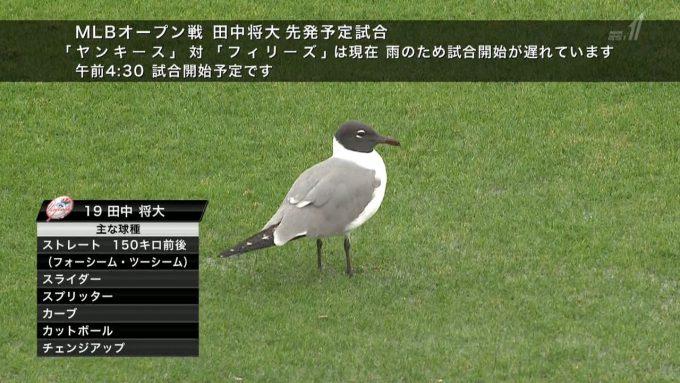 【野球のテレビ誤植テロップおもしろ画像】リラックス! MLBオープン戦に先発出場予定の田中将大選手、鳥のようにとても落ち着いてる(笑)