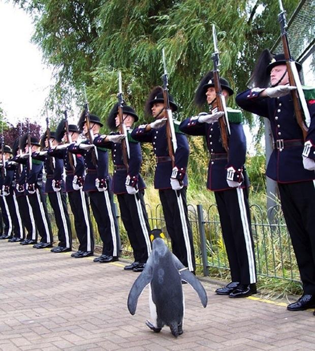 整列! 近衛部隊のセレモニーで堂々と歩くペンギン「ニルス・オーラヴ(Nils Olav)」が凛々しい(笑)
