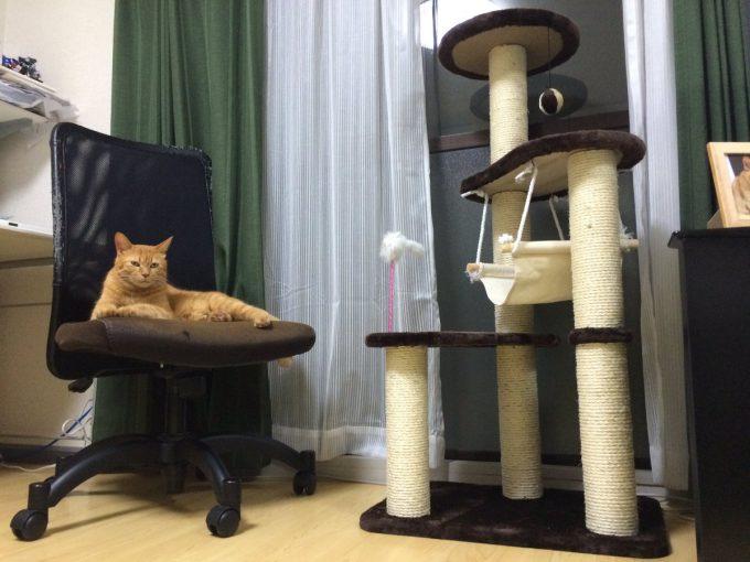 【猫おもしろ画像】なんで? 猫にせっかくキャットタワーを買ってあげたのに遊んでくれない(笑)