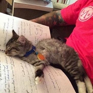 眠いニャ! 飼い主さんとノートの間で気持ちよさそうに眠る子猫がかわいい(笑)