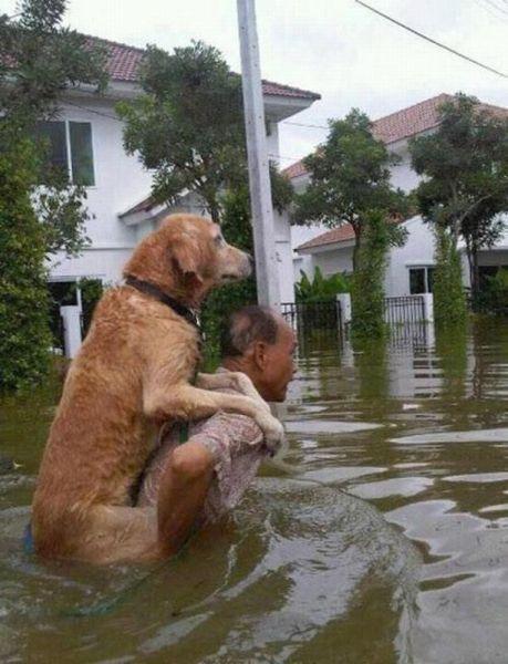 【犬おもしろ画像】ありがとう! 大洪水の中、おじいちゃんの背中におんぶされて助けられる犬(笑)dog_0030