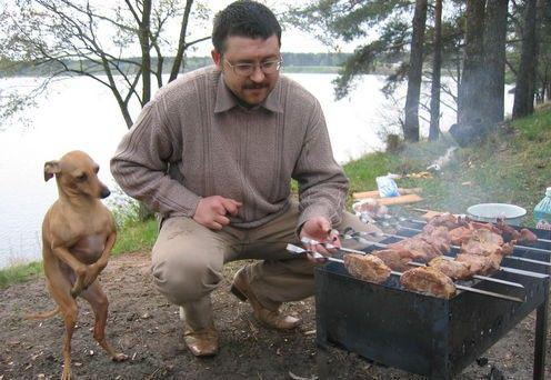 まだかなー? バーベキューで肉が焼けるのを礼儀正しく立って待つ犬(笑)