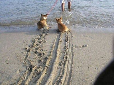 【海と犬おもしろ画像】必死に海に入るまいとする犬のおもしろい足跡(笑)