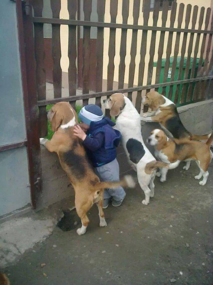 子どもと一緒に柵から外を覗く犬たちがおもしろい(笑)