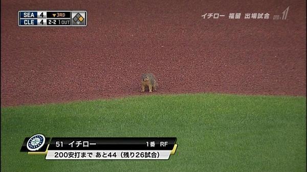 【野球テレビ誤植テロップおもしろ画像】イチロー? 試合に出場したイチローがリスみたいに見える誤テロップ(笑)