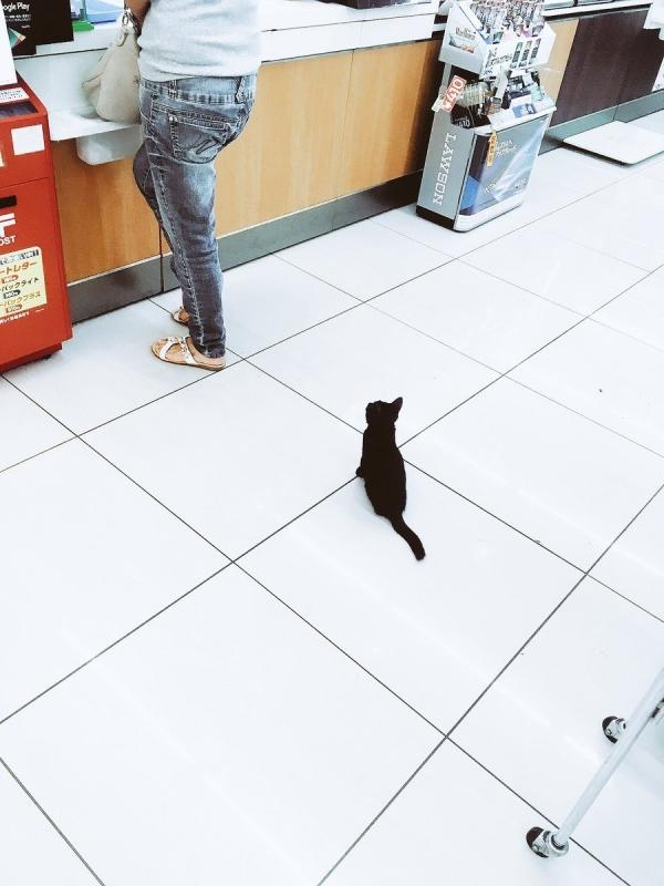 何買うの? コンビニで買い物しようと思ったら会計待ちする子猫に遭遇(笑)
